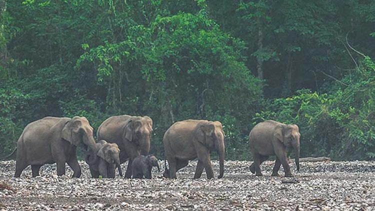 Satkosia-Wildlife-Sanctuary