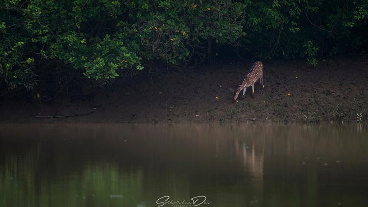 Similipal-Tiger-Reserve