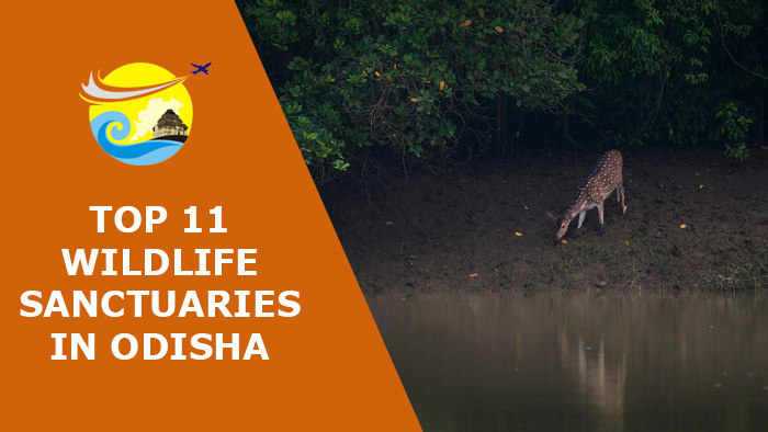 Top-11-Must-Visit-Wildlife-Sanctuaries-in-Odisha