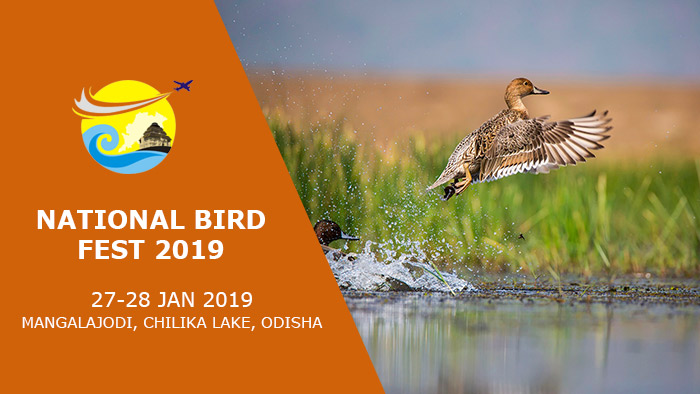 National-Bird-Fest-2019