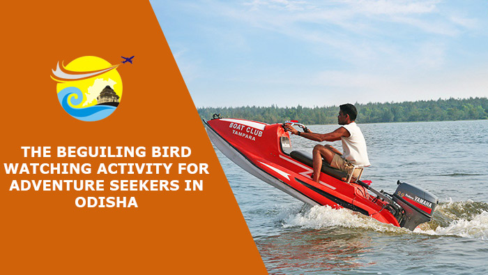 The-Beguiling-Bird-Watching-Activity-for-Adventure-Seekers-in-Odisha