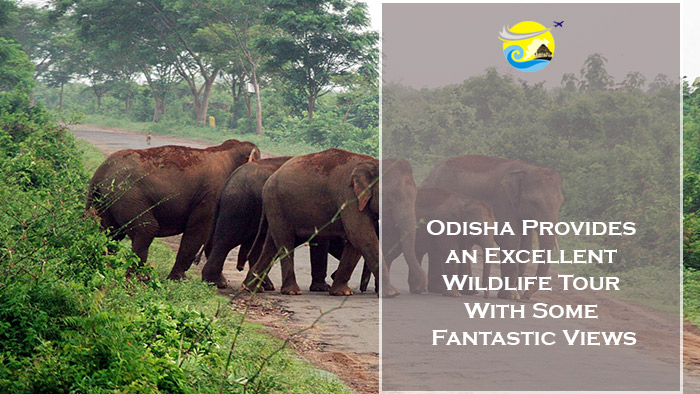 Odisha-Provides-an-Excellent-Wildlife-Tour-With-Some-Fantastic-Views