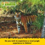 Baisipalli wildlife Odisha sanctuary
